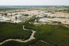 海南东寨港国家级自然保护区湿地生态修复工程