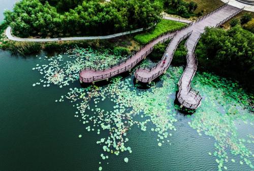 7月26日,游客在山东省邹平县韩店镇禾和湿地公园游玩,该湿地公园采用污水处理厂的中水作为水源。2015年8月开始,山东省邹平县计划用3年时间推动水生态文明建设,包括节水生态灌区建设与改良、城市节水减排与水系生态化升级、多功能生态水网建设与提升、最严格水资源管理制度落实、全民参与和水文化构筑行动五大方面。目前,水生态文明建设初显成效,当地群众开始享受水生态文明带来的美好生活。新华社发(张可荣 摄)