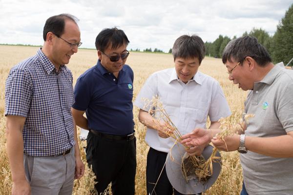 7月26日,呼伦贝尔农垦集团谢尔塔拉农场生态草牧业试验区的一处人工草地,中科院植物所所长、院士方精云(左三)在和专家交流高产燕麦的试种成果。新华社记者 金立旺 摄