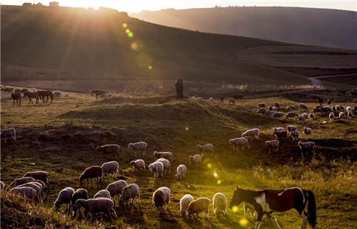 在江布拉克风景区内,两位牧羊人在放牧