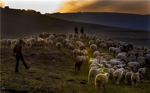 在江布拉克风景区内,几位牧民赶着牲畜回家