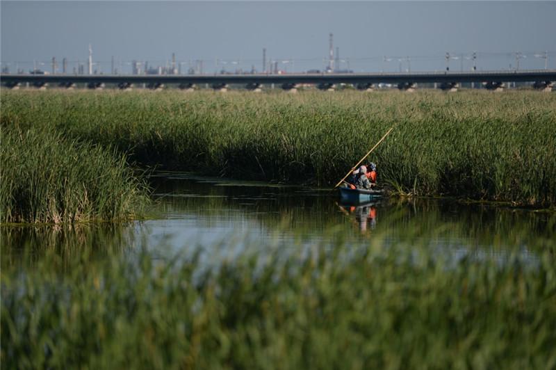 7月3日,工作人员在龙凤湿地自然保护区内进行清理工作。