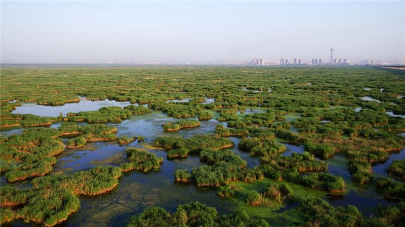 这是航拍的龙凤湿地自然保护区(7月4日摄)。