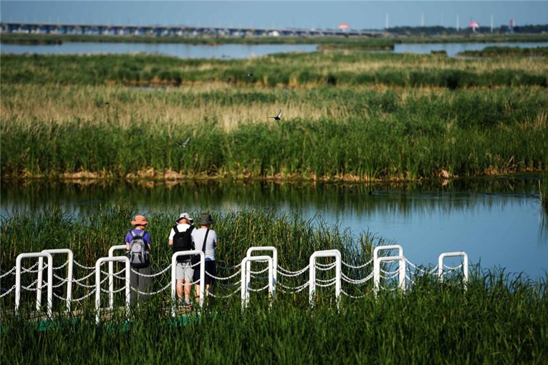 7月3日,游客在欣赏龙凤湿地自然保护区的夏日风光。