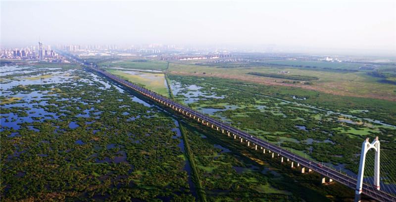 这是大庆龙凤湿地大桥横跨龙凤湿地自然保护区(7月4日摄)。