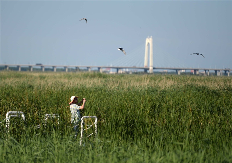 7月3日,游客在龙凤湿地自然保护区游览。