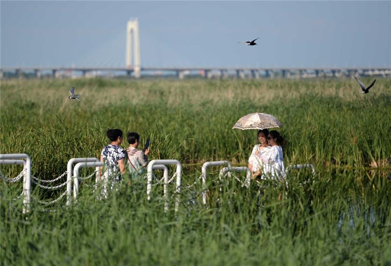 7月3日,游客在龙凤湿地自然保护区拍照留念。