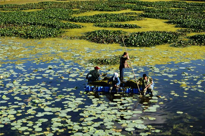 7月3日,工作人员在龙凤湿地自然保护区内进行清理保护工作。