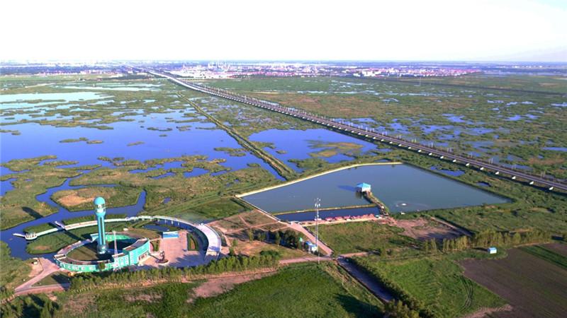这是航拍的龙凤湿地自然保护区一角(7月3日摄)。