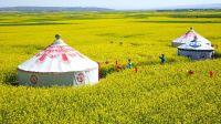 甘肃省张掖市民乐县种植的十万亩油菜花进入盛花期