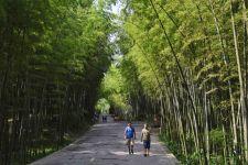 四川省宜宾市内的蜀南竹海景色宜人