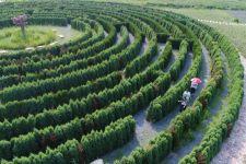 河北省沙河市红石沟生态休闲农场的植物迷宫