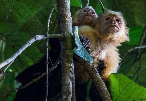 可爱的猴母子