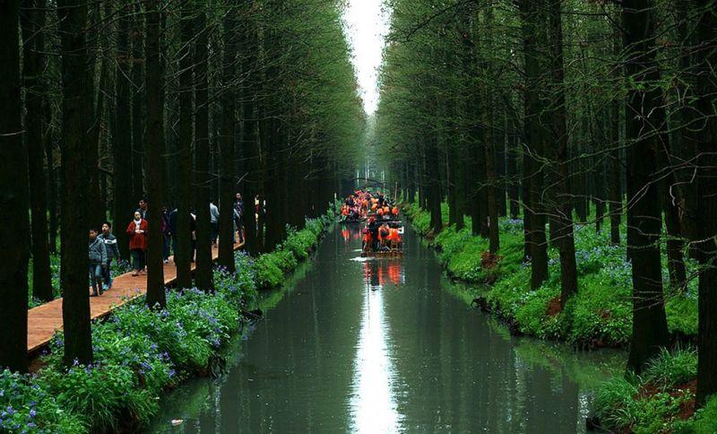 苏北水上森林