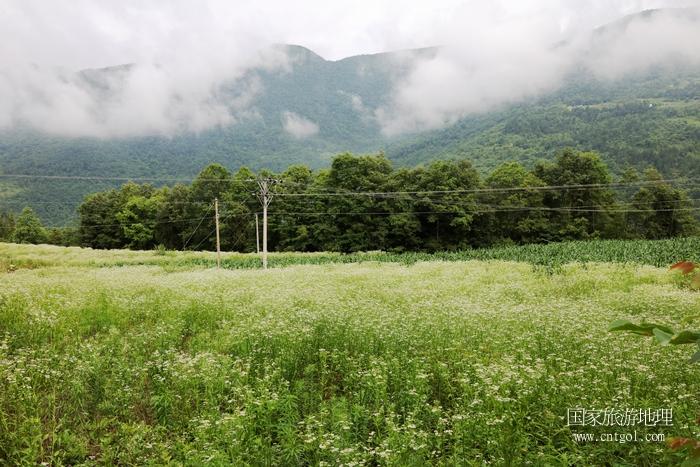 图15:高山康养之地野花遍地,生态环境优美   唐探峰摄