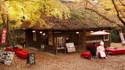 日本奈良:秋色美如画(图)