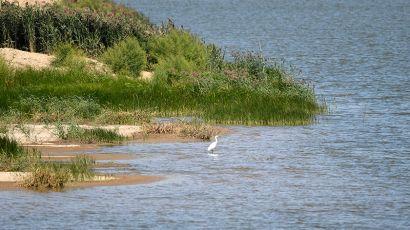 天津西青:鱼塘变湿地 生态修复美