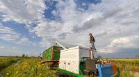 吉林省吉林市永吉縣:金秋豐收的水稻(圖)