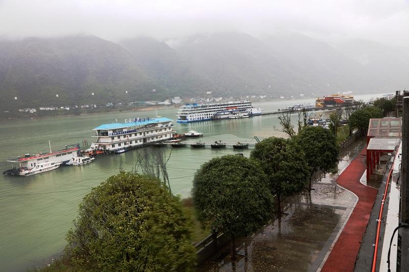图4:巫山港区八月桂花盛开   唐探峰摄