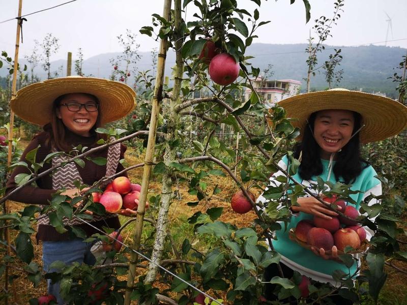 毕业于西南林业大学的吕福党、张宁丽爱上了这片土地。