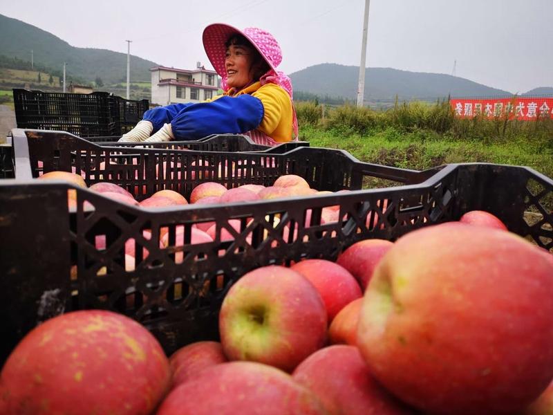 对苹果进行分类。