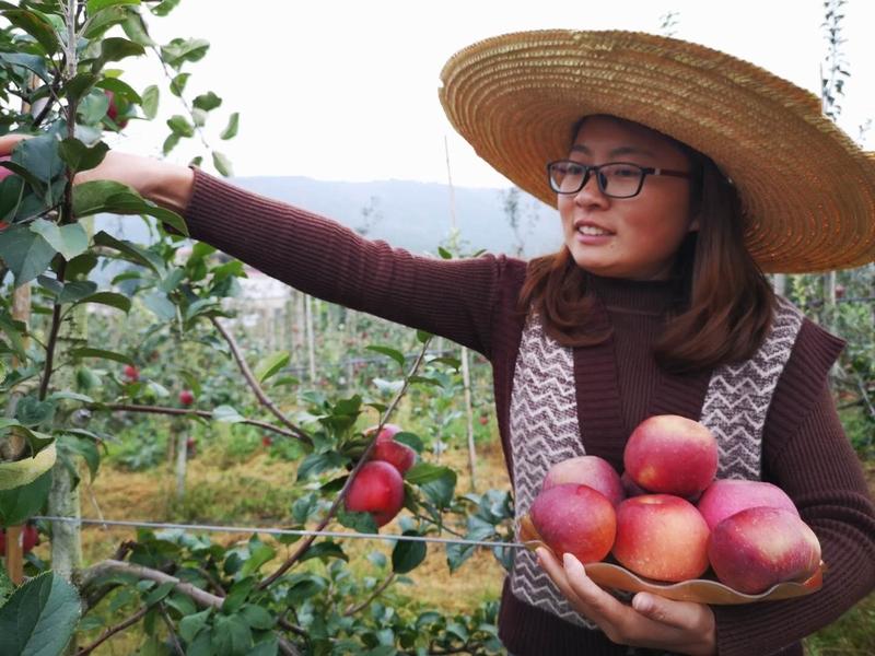 摘的是苹果,收获的是喜悦。