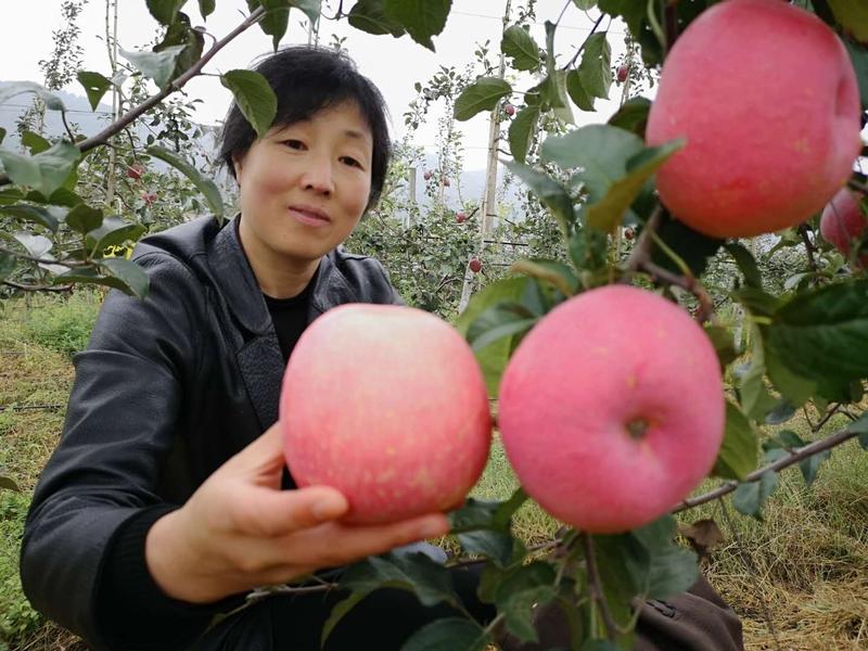 游客对树上的苹果爱不释手。