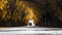 新疆塔什库尔干塔吉克:帕米尔秋意正浓