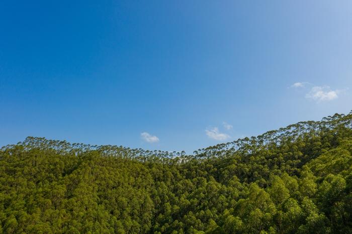 4、航拍广西梧州绿林在蔚蓝天空衬托下如画景色(何华文)