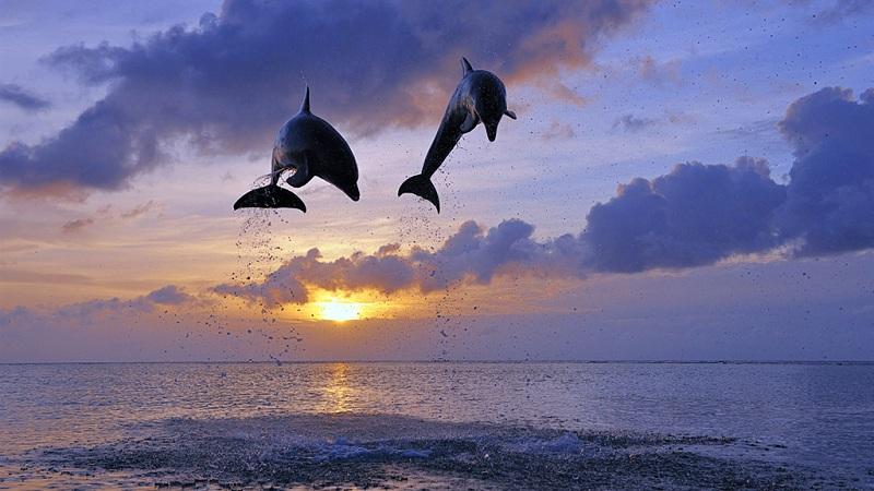 跳跃的海豚与日出
