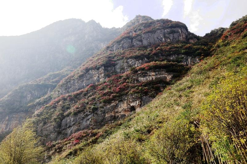图3:神女景区南环线天灯堡红叶层层耸彩   唐探峰摄