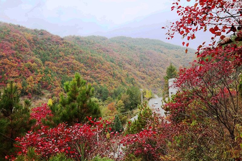 图1:红叶彩叶媲美各展神韵   唐探峰摄