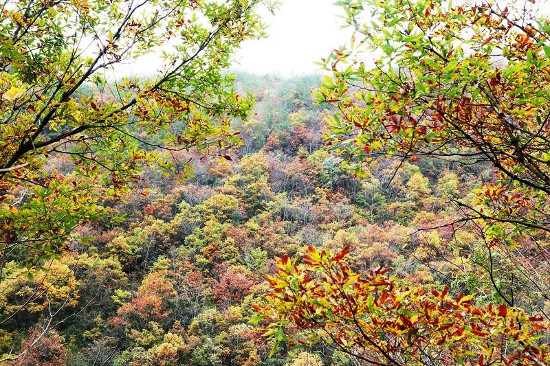 """图5:自然保护区""""林杂山如画""""  唐探峰摄"""