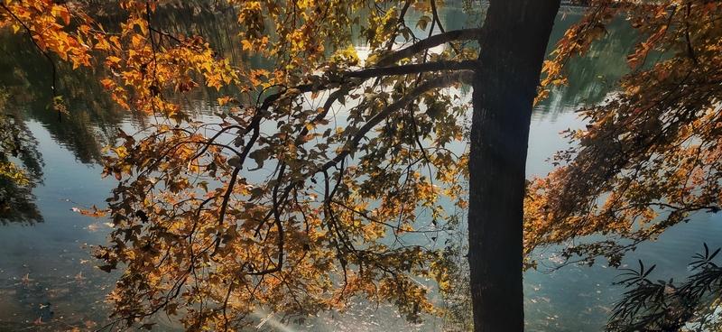 山光水色映枫叶。