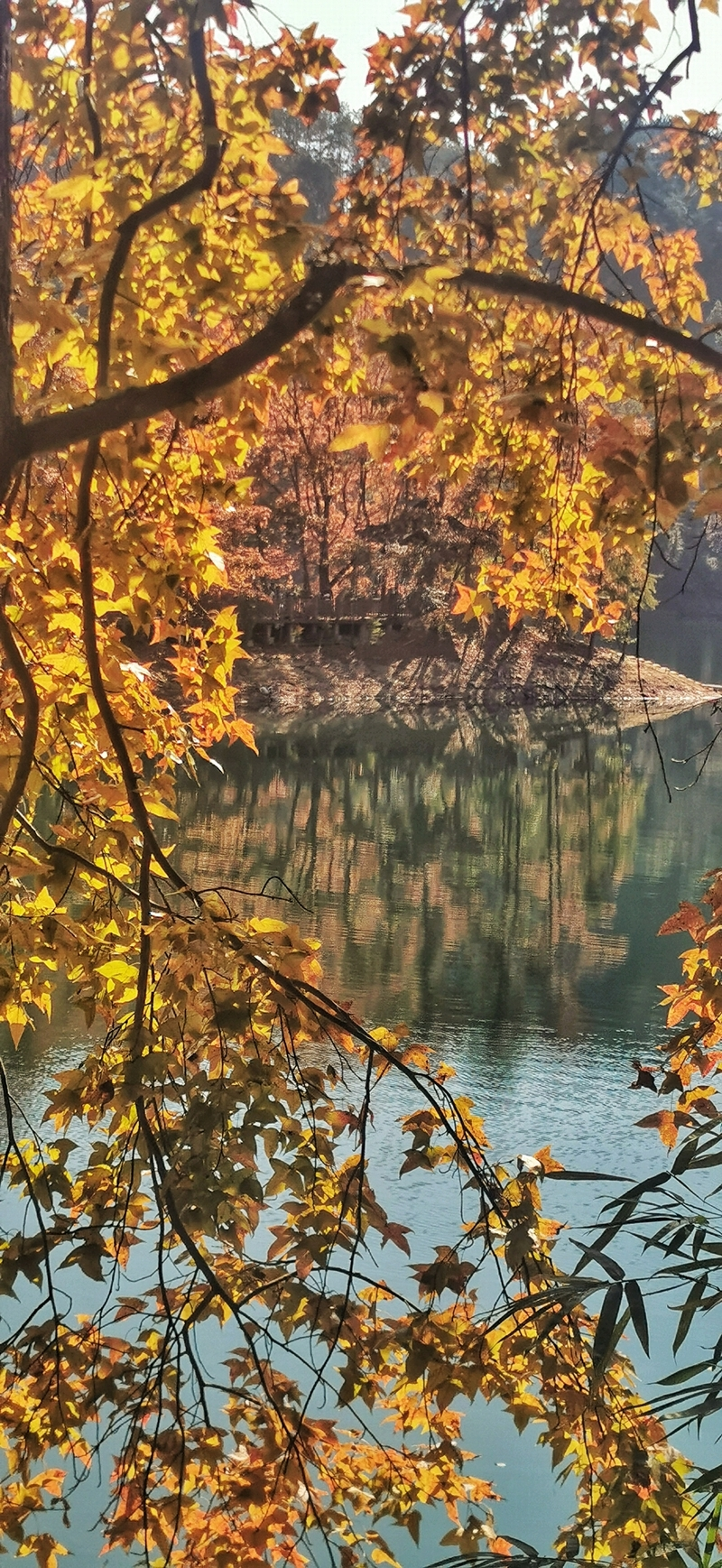 阳明湖景区C位拍摄点已是诗意枫情。