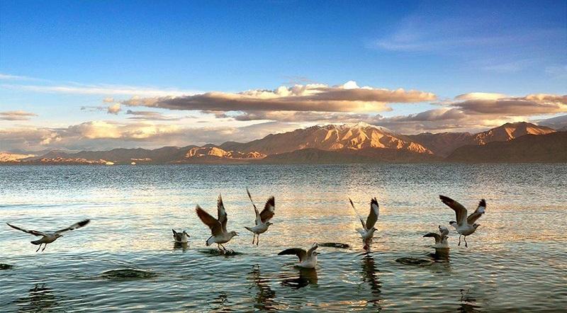 班公湖上的生态景观