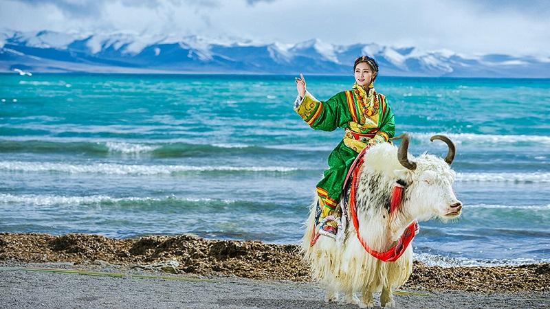 西藏藏族姑娘骑牦牛