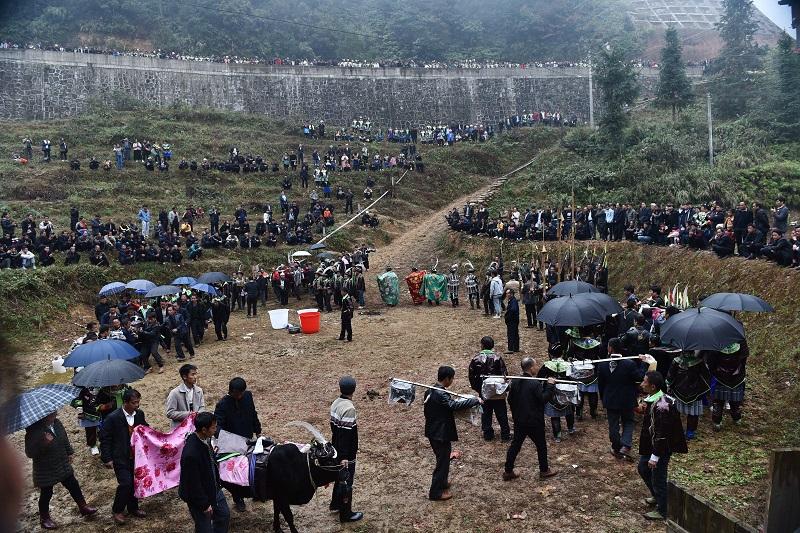 2020年11月16至18日,貴州省黔東南苗族侗族自治州從江縣加勉鄉黨港村舉行24年一度鼓藏節活動。圖為鼓藏家族牽牛轉牛塘祭祖