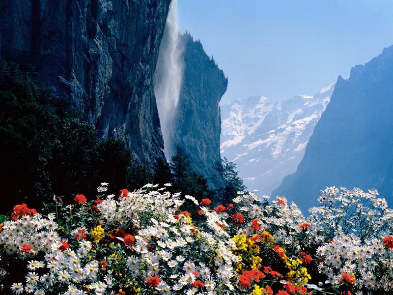 雪山下的鲜花盛开
