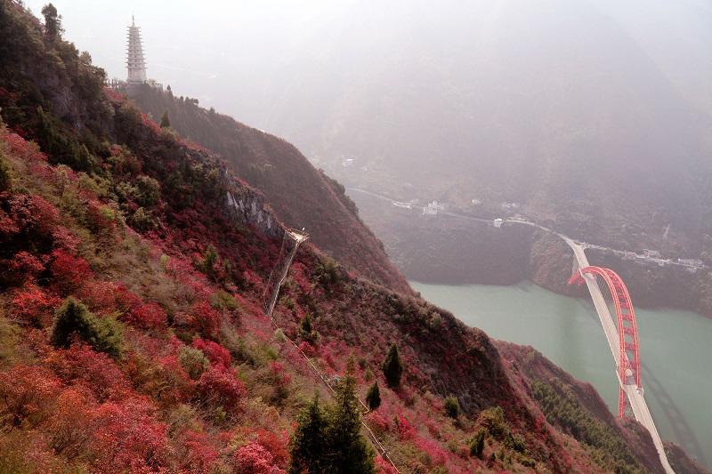 图3:红叶联姻虹桥   唐探峰摄