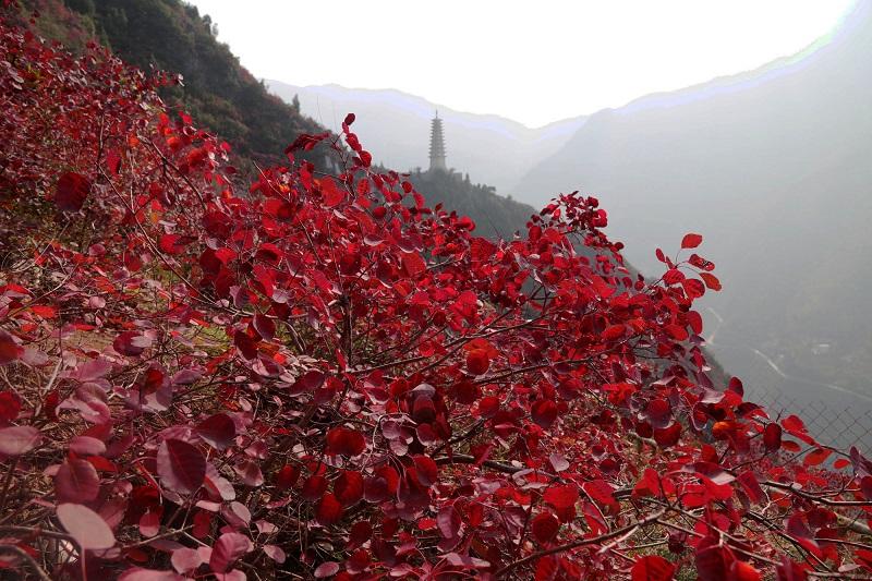 图4:文峰塔高耸彩红中   唐探峰摄