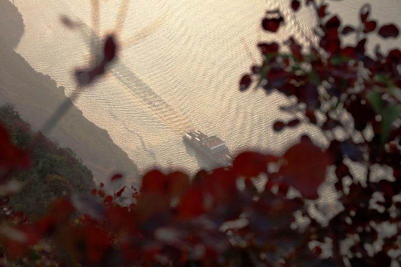 图6:巫峡红叶恋江波   唐探峰摄