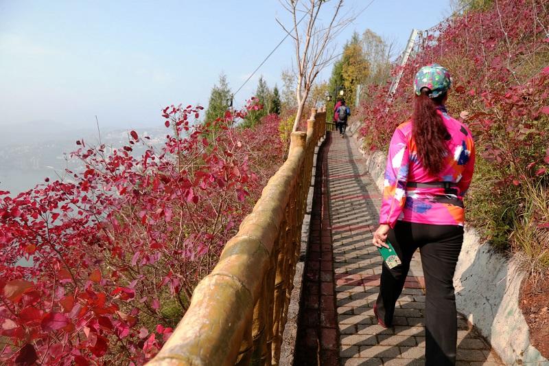 图11:游客赏红叶美景   唐探峰摄