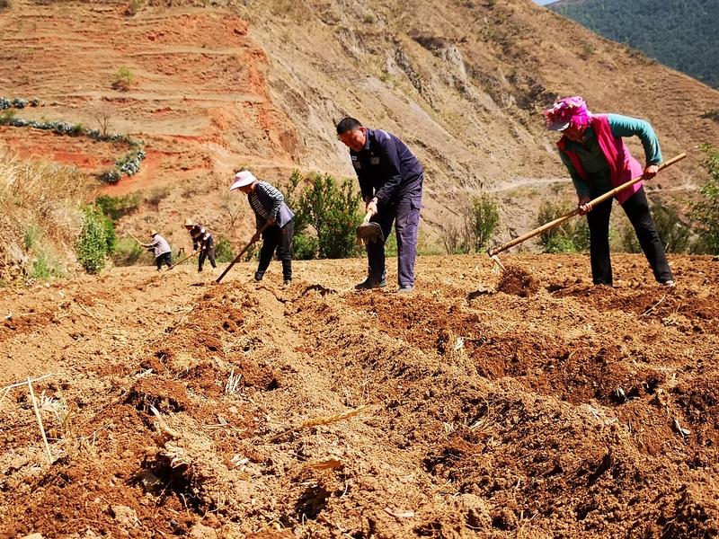 第一书记包广祥和村民一块下地干农活。 王吉聪