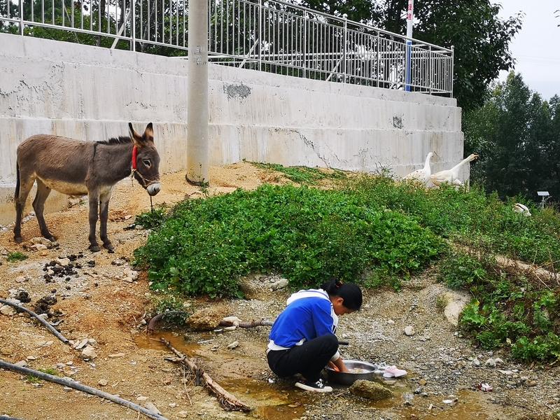 山泉水引进村,人畜用上甘泉水。 王吉聪  摄