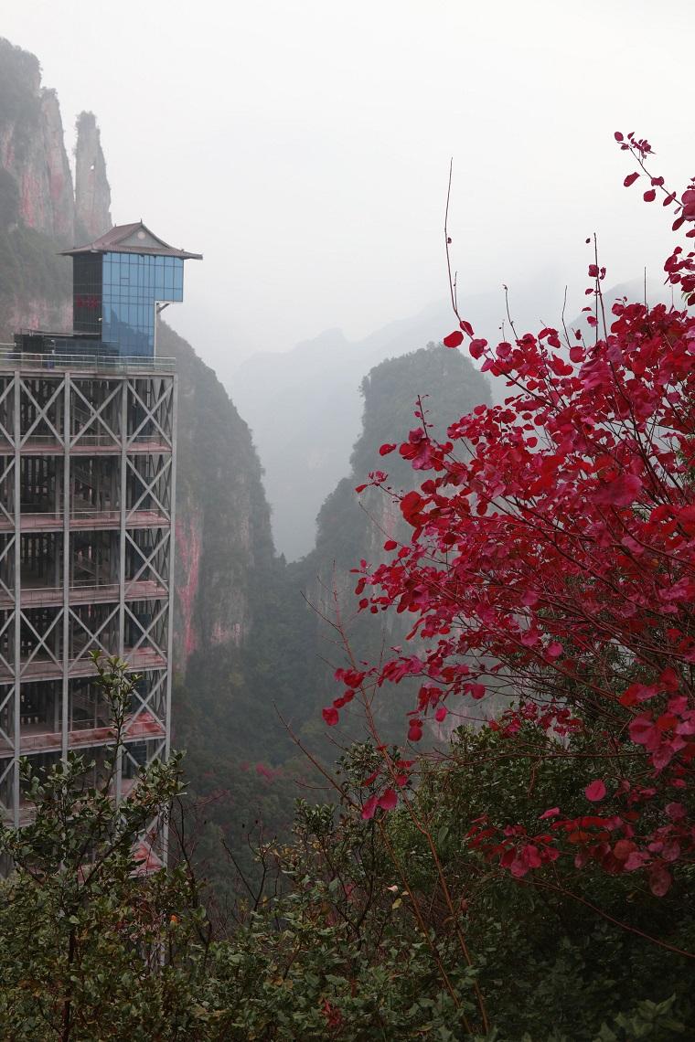 图1:世界第一梯神女电梯位于绝景红叶中   唐探峰摄于神女景区南环线黄岩
