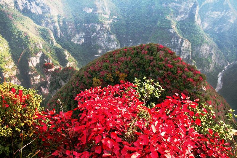 图6:三峡神龟披彩装赏红叶  唐探峰摄于神女景区南环线黄岩