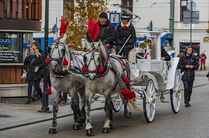 克拉科夫有着号称欧洲最漂亮的观光马车
