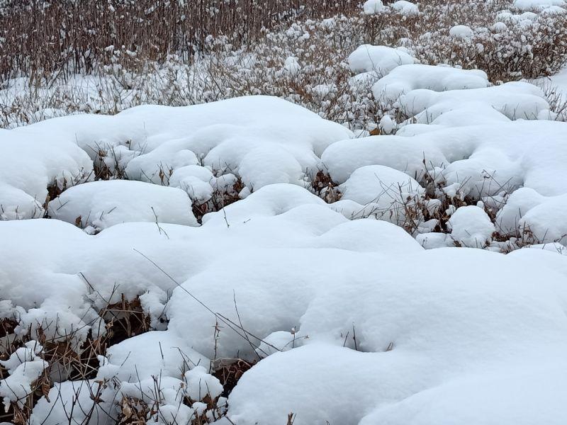 白雪覆盖的植被