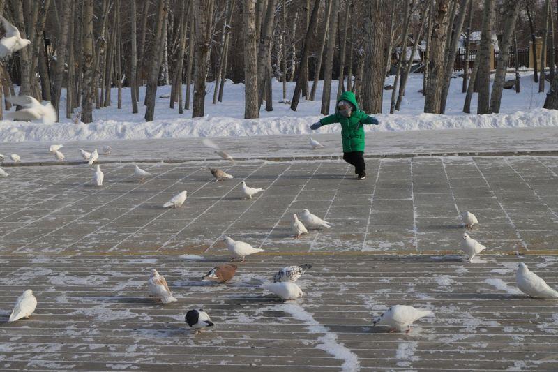 追逐鸽子的儿童
